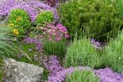 Фото 27 Цветы алиссум : всё, что нужно знать о посадке, выращивании и уходе 50+ фото