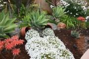 Фото 26 Цветы алиссум : всё, что нужно знать о посадке, выращивании и уходе 50+ фото