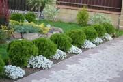 Фото 3 Цветы алиссум : всё, что нужно знать о посадке, выращивании и уходе 50+ фото
