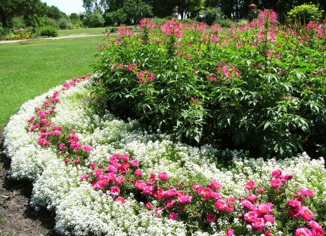 Великолепное оформление садового бордюра
