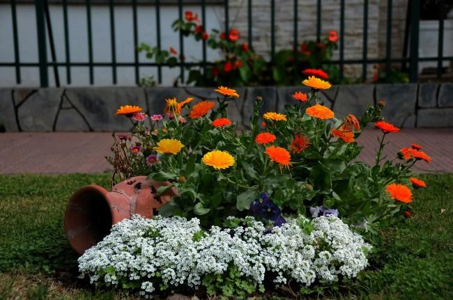 Садовая композиция с осенними цветами