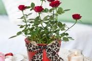 Фото 10 Как вырастить розу дома: все секреты от опытных цветоводов