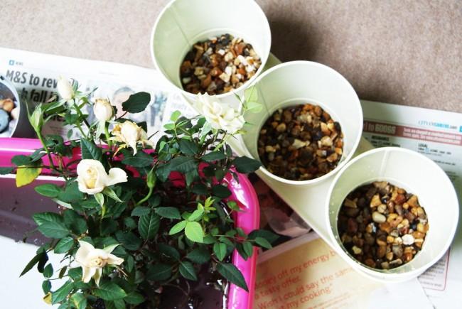 Как вырастить розу дома? Советы экспертов (фото)