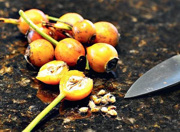 Семена лучше собирать с легка румяных плодов