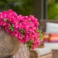 Какие цветы нельзя держать дома: 60 фото прекрасных, но опасных растений, народные приметы и научные обоснования фото