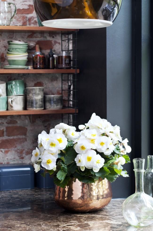 Какие цветы нельзя держать дома: фото с названиями