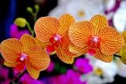Фото 1 Какие цветы нельзя держать дома: 60 фото прекрасных, но опасных растений, народные приметы и научные обоснования