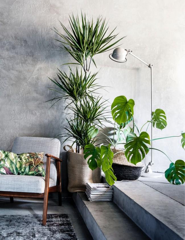 Некоторые комнатные растения, несмотря на свою красоту, вовсе не безобидны. Подробнее – читайте ниже.