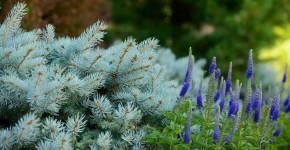 Многолетние растения (70 фото): Все лучшие сорта и идеи для роскошного сада фото