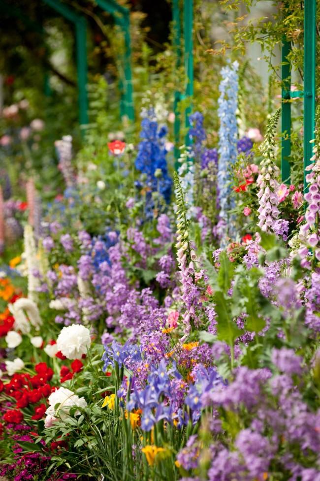 Многослойный сад из люпинов, дельфиниумов, коровяка, пионов и не только