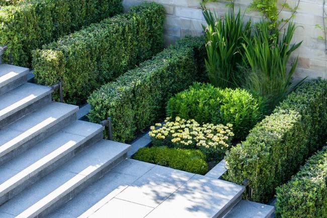 Самшит и ирисы в ультрасовременном ландшафтном дизайне: идея, как высаживать растения разной высоты