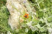 Фото 14 Многолетние растения (70 фото): Все лучшие сорта и идеи для роскошного сада