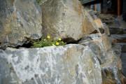 Фото 13 Многолетние растения (70 фото): Все лучшие сорта и идеи для роскошного сада