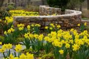 Фото 3 Многолетние растения (70 фото): Все лучшие сорта и идеи для роскошного сада