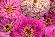 Фото 12 Многолетние растения (70 фото): Все лучшие сорта и идеи для роскошного сада