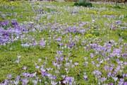 Фото 11 Многолетние растения (70 фото): Все лучшие сорта и идеи для роскошного сада