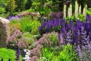 Фото 8 Многолетние растения (70 фото): Все лучшие сорта и идеи для роскошного сада