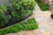 Фото 5 Многолетние растения (70 фото): Все лучшие сорта и идеи для роскошного сада