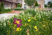 Фото 4 Многолетние растения (70 фото): Все лучшие сорта и идеи для роскошного сада