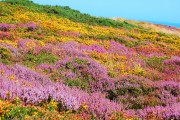 Фото 30 Многолетние растения (70 фото): Все лучшие сорта и идеи для роскошного сада