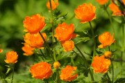 Фото 29 Многолетние растения (70 фото): Все лучшие сорта и идеи для роскошного сада