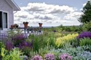 Фото 28 Многолетние растения (70 фото): Все лучшие сорта и идеи для роскошного сада