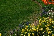 Фото 27 Многолетние растения (70 фото): Все лучшие сорта и идеи для роскошного сада