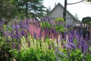 Фото 24 Многолетние растения (70 фото): Все лучшие сорта и идеи для роскошного сада