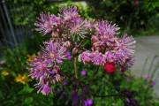 Фото 21 Многолетние растения (70 фото): Все лучшие сорта и идеи для роскошного сада