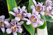 Фото 7 Многолетние растения (70 фото): Все лучшие сорта и идеи для роскошного сада