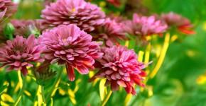 Осенние цветы в саду (65 фото с названиями): как превратить ваш сад в райский уголок фото