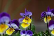 Фото 6 Осенние цветы в саду (65 фото с названиями): как превратить ваш сад в райский уголок