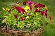Фото 2 Осенние цветы в саду (65 фото с названиями): как превратить ваш сад в райский уголок