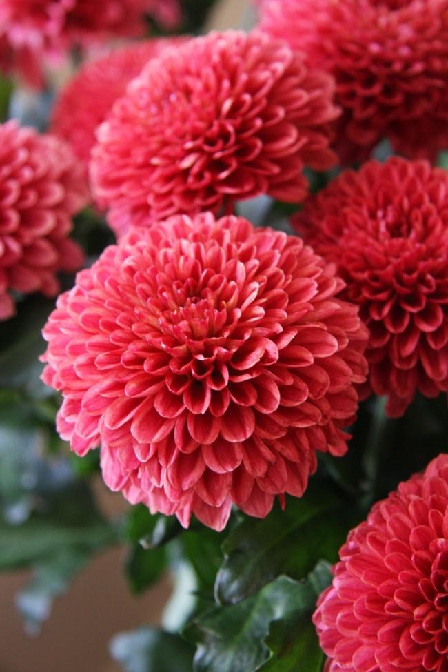 Цветок ирис фото живого цветка