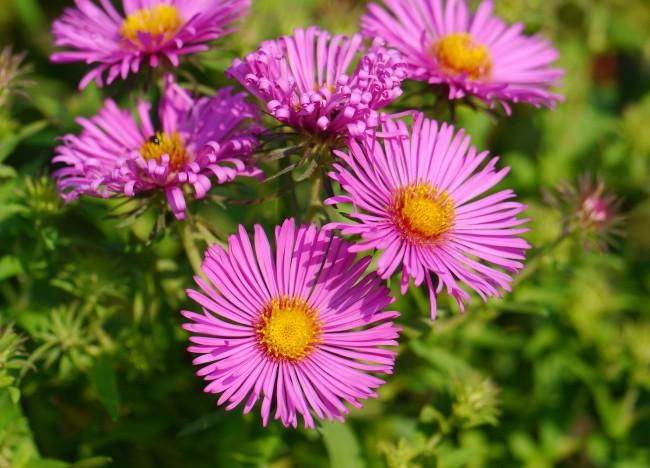 все садовые цветы с фото и названиями от а до я