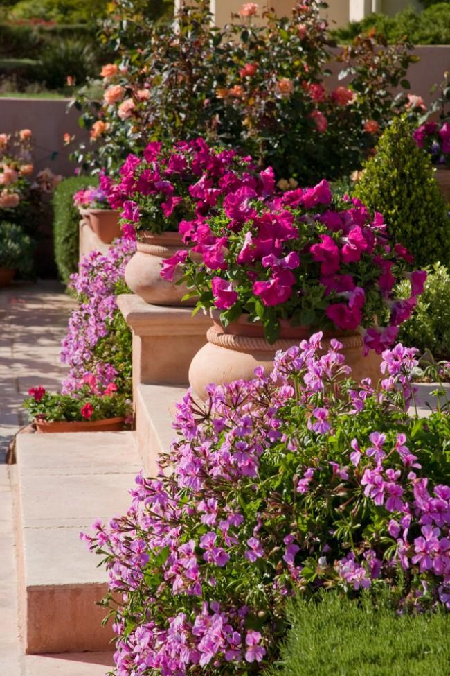 Удачное сочетание цветов сделает ваш двор неповторимым