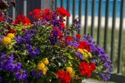Фото 1 Осенние цветы в саду (65 фото с названиями): как превратить ваш сад в райский уголок