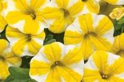 Фото 11 Осенние цветы в саду (65 фото с названиями): как превратить ваш сад в райский уголок
