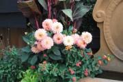 Фото 20 Осенние цветы в саду (65 фото с названиями): как превратить ваш сад в райский уголок