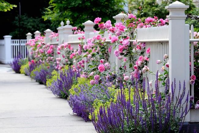 Шикарное сочетание садовых и полевых цветов