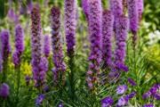 Фото 24 Осенние цветы в саду (65 фото с названиями): как превратить ваш сад в райский уголок