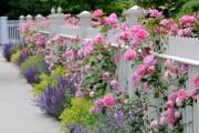 Фото 8 Парковые розы (50 фото): аристократизм и ностальгическая изысканность вашего сада