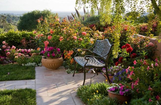 К старинным английским розам относятся окультуренные декоративные шиповники, сорта которых получили в результате скрещивания