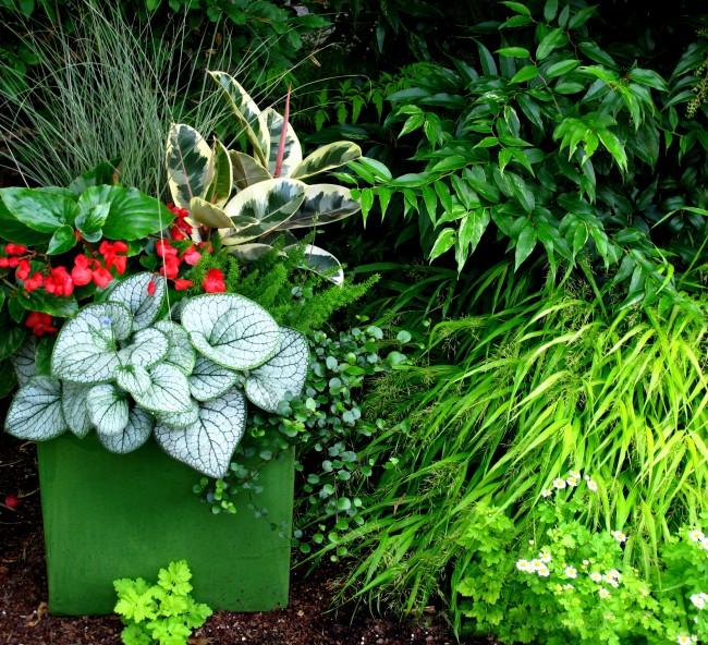 Строманта будет великолепно смотреться среди других растений вашего ландшафта