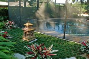 Фото 5 Тропическая красавица строманта: Правила ухода в домашних условиях 40+ фото