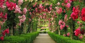 Роскошные кустовые розы: 50 изысканных садов с королевским ландшафтом (фото) фото
