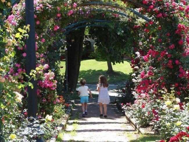 Плетистые розы пользуются особым успехом при оформлении заборов, декоративных колонн и всевозможных арок