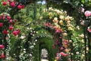 Фото 25 Роскошные кустовые розы: 50 изысканных садов с королевским ландшафтом (фото)