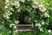 Фото 11 Роскошные кустовые розы: 50 изысканных садов с королевским ландшафтом (фото)