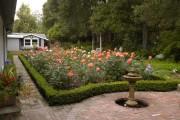 Фото 13 Роскошные кустовые розы: 50 изысканных садов с королевским ландшафтом (фото)